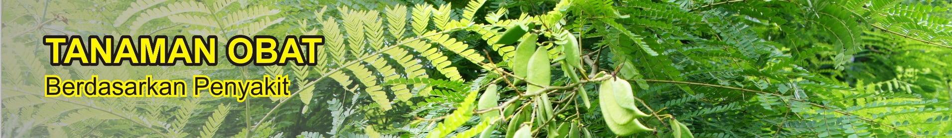 tanaman obat berdasarkan penyakit - tanaman obat taman husada