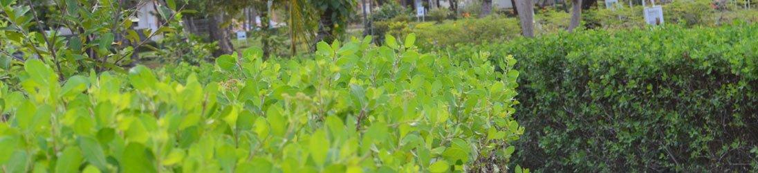 tanaman obat taman husada graha famili
